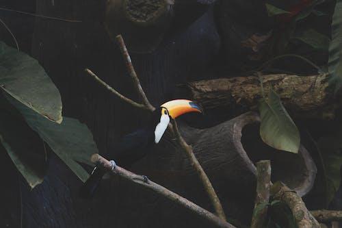 açık hava, ağaç, baş içeren Ücretsiz stok fotoğraf