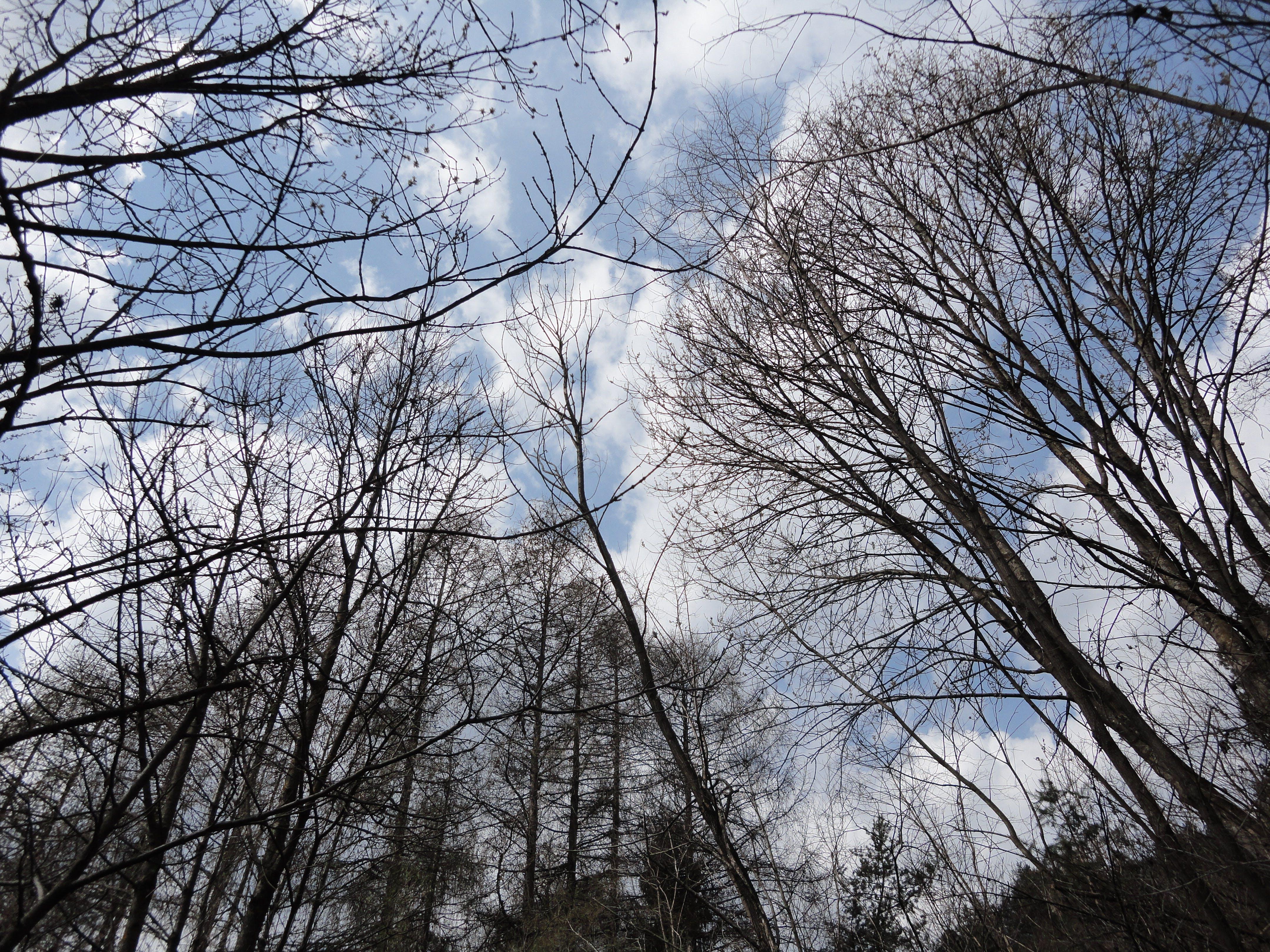 Free stock photo of alberi spogli, branches, cielo, clouds