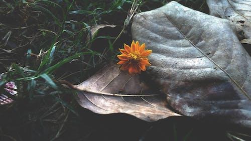 çiçek, çim, dökülmüş yapraklar, güz yaprakları içeren Ücretsiz stok fotoğraf