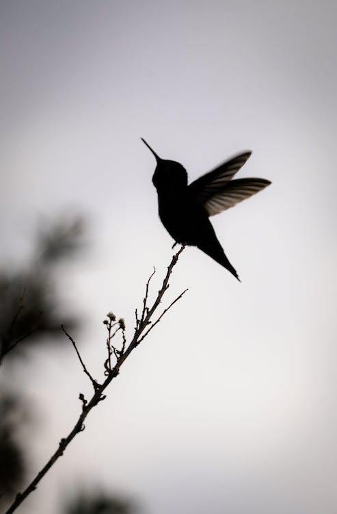 Black Bird Flying on Mid Air
