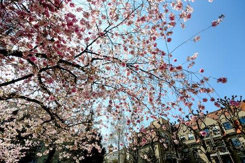Ảnh lưu trữ miễn phí về bầu trời, blume, cánh hoa, công viên