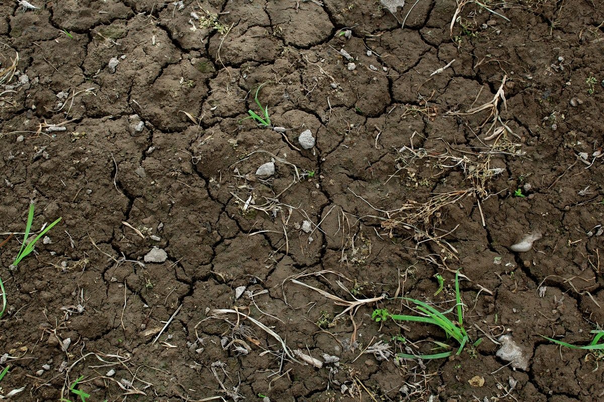 green grass on dry brown soil free stock photo