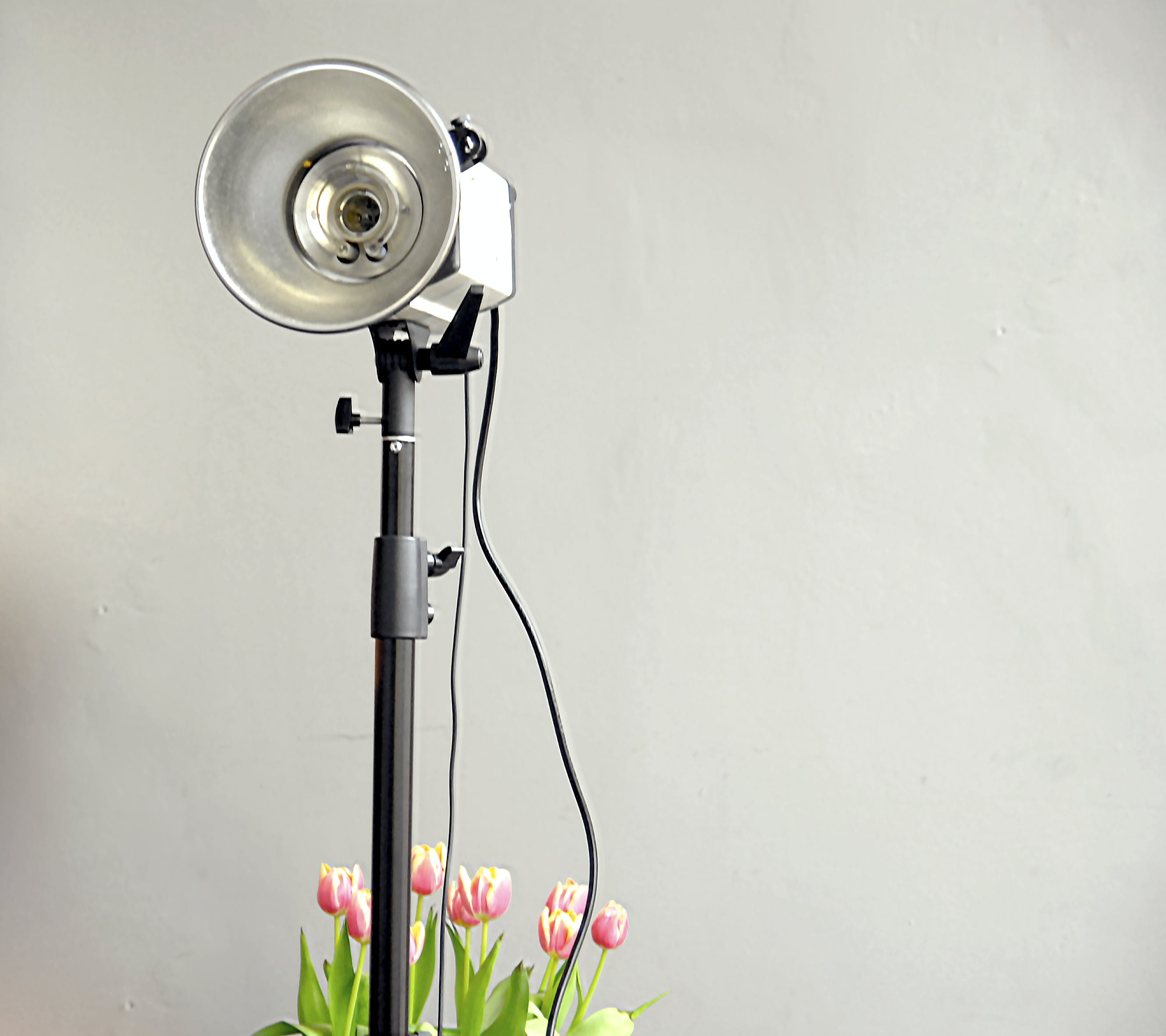 Free stock photo of light, flowers, lamp, decoration