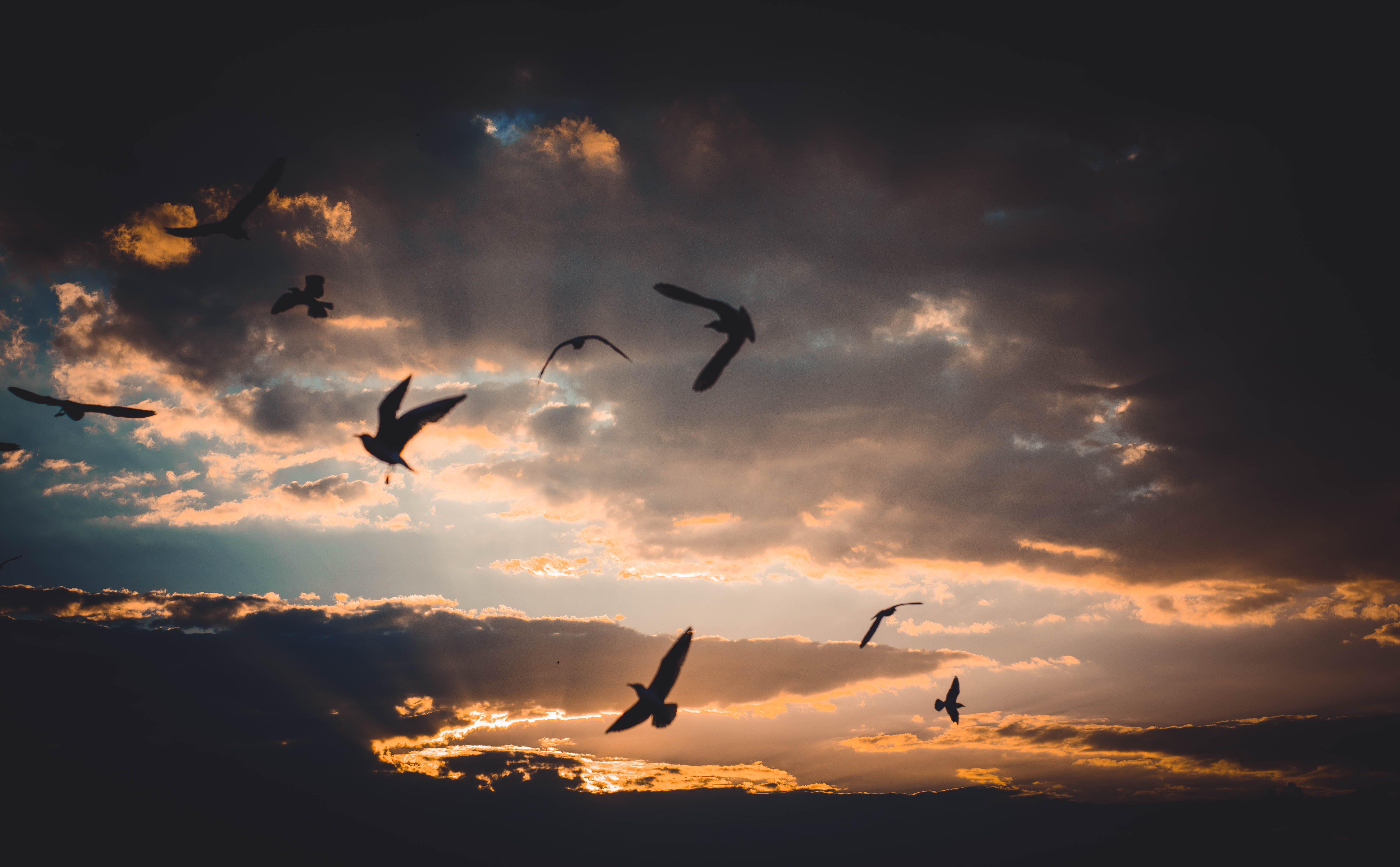 Flock of Birds Flying Above Sky during Sunset