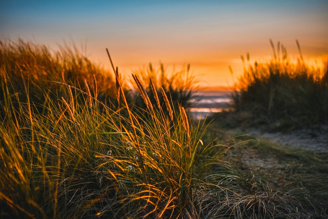 Green Grass Beside Sea