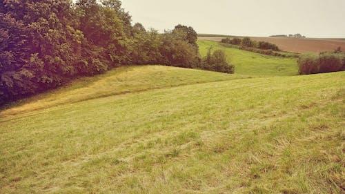 Δωρεάν στοκ φωτογραφιών με αγρόκτημα, γήπεδο, γρασίδι, γραφικός