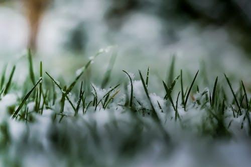Безкоштовне стокове фото на тему «#gras, #snow, #winter»