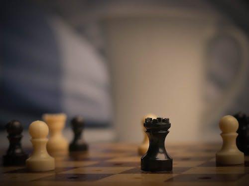 Безкоштовне стокове фото на тему «# conversation, #carpet, #chess, #cub»