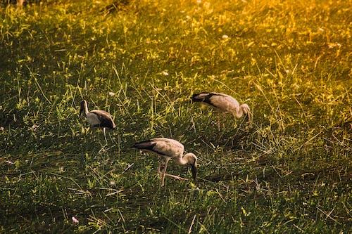 Free stock photo of bird photography, nature beauty, nature life