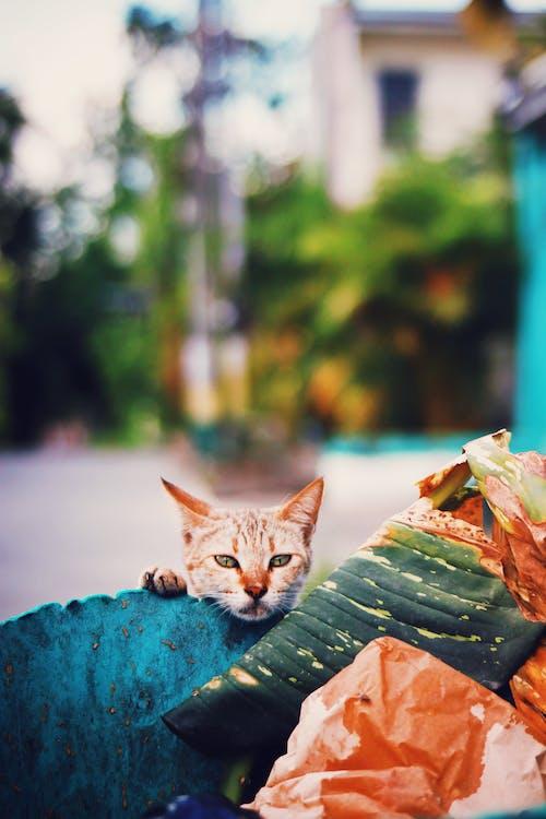 Stray cat near trash can on street