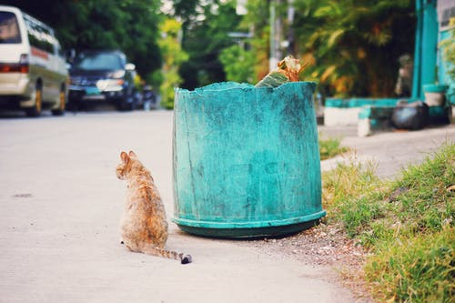 Red stray cat sitting on asphalt sidewalk near shabby trash can with garbage on street with cars and green trees