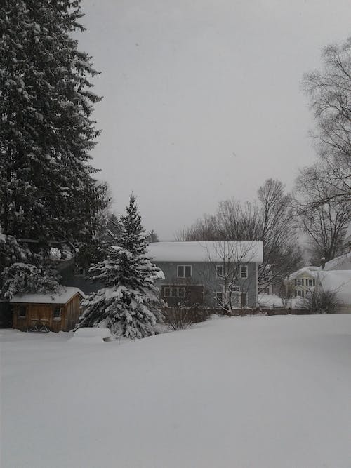 Free stock photo of yard covered in snow