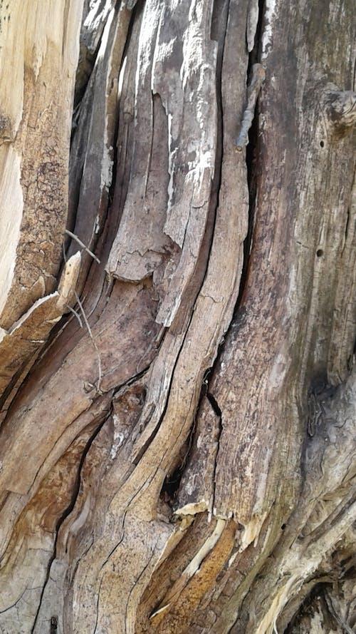 Free stock photo of tree bark, tree texture
