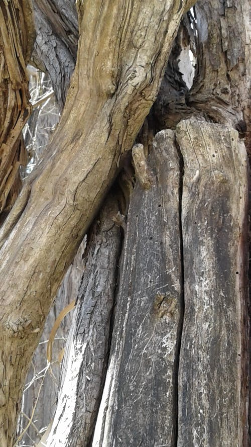 Free stock photo of tree bark, wood, wood texture