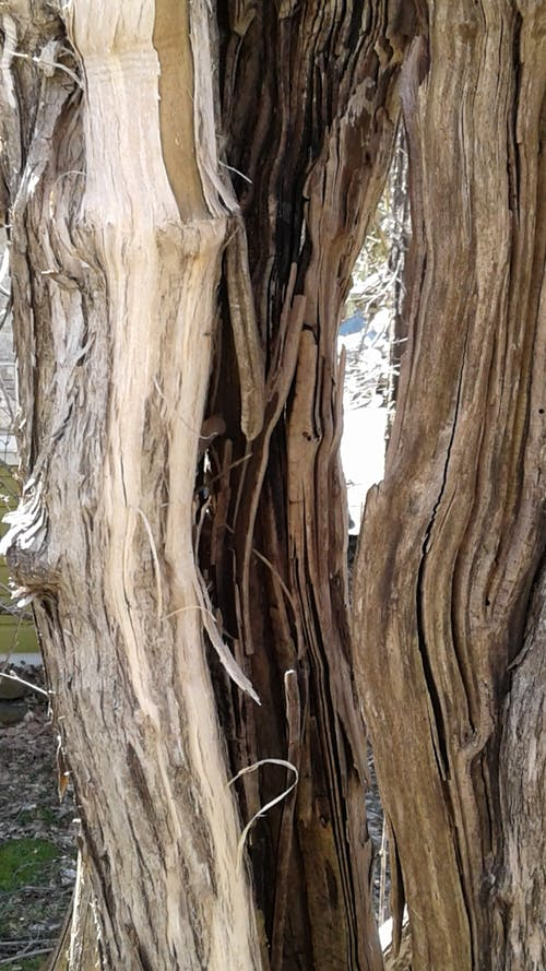 Free stock photo of tree bark, wood texture