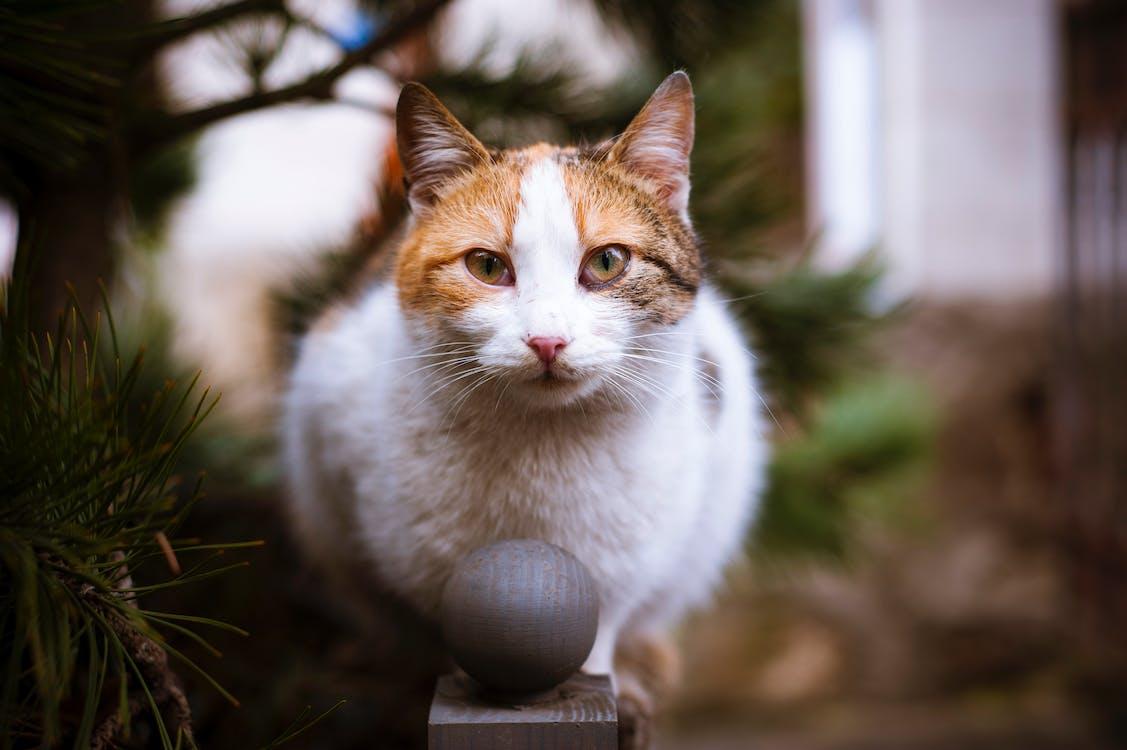 anak kucing, binatang, bulu