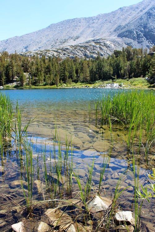 Photos gratuites de cailloux, clair, eau