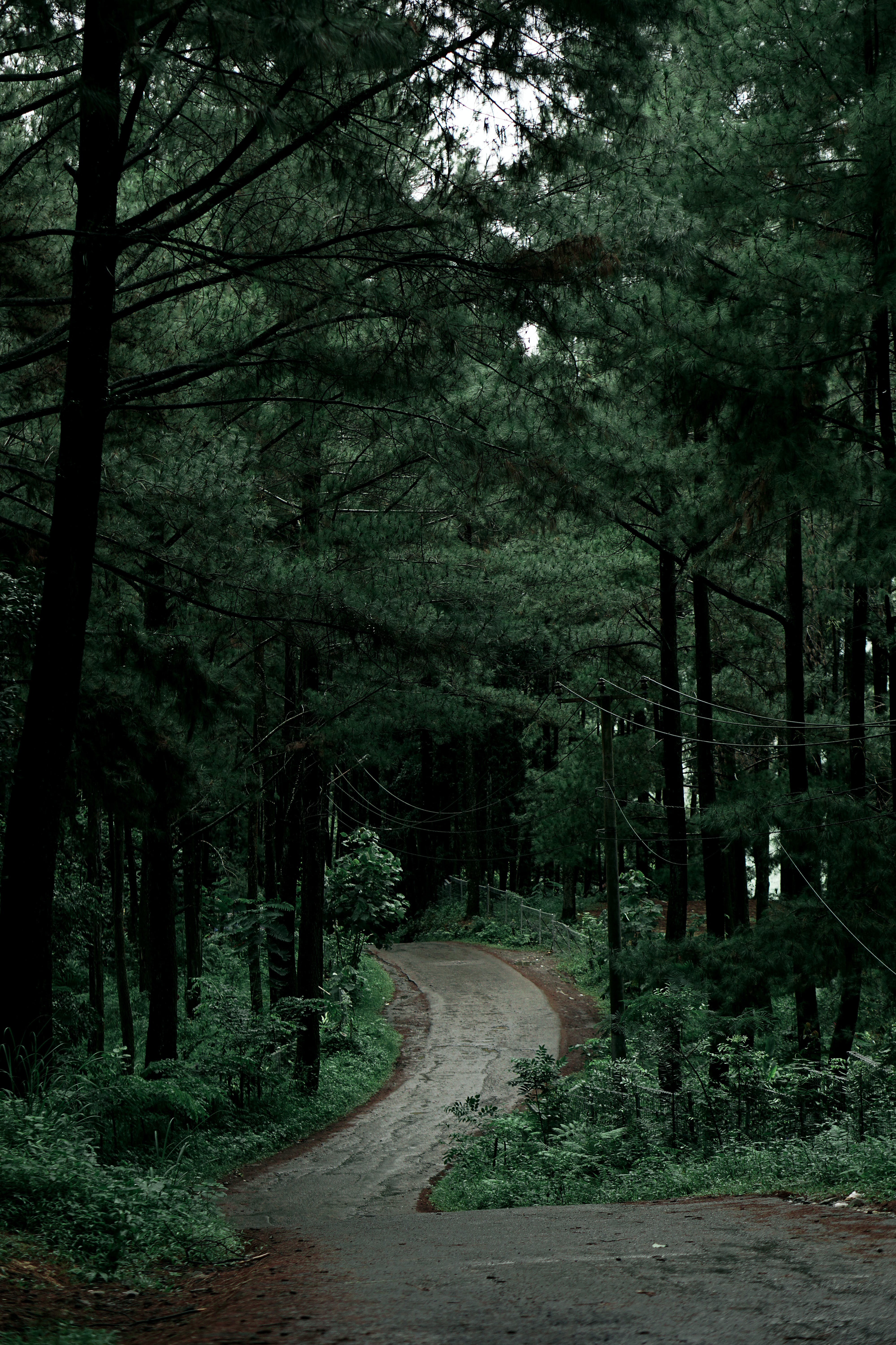Free stock photo of road, nature, forest, hills