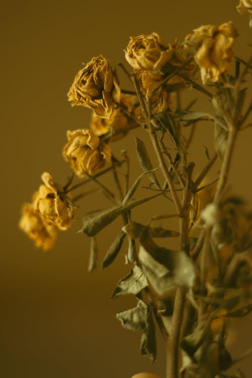 Základová fotografie zdarma na téma 50mm, aranžování květin, detail