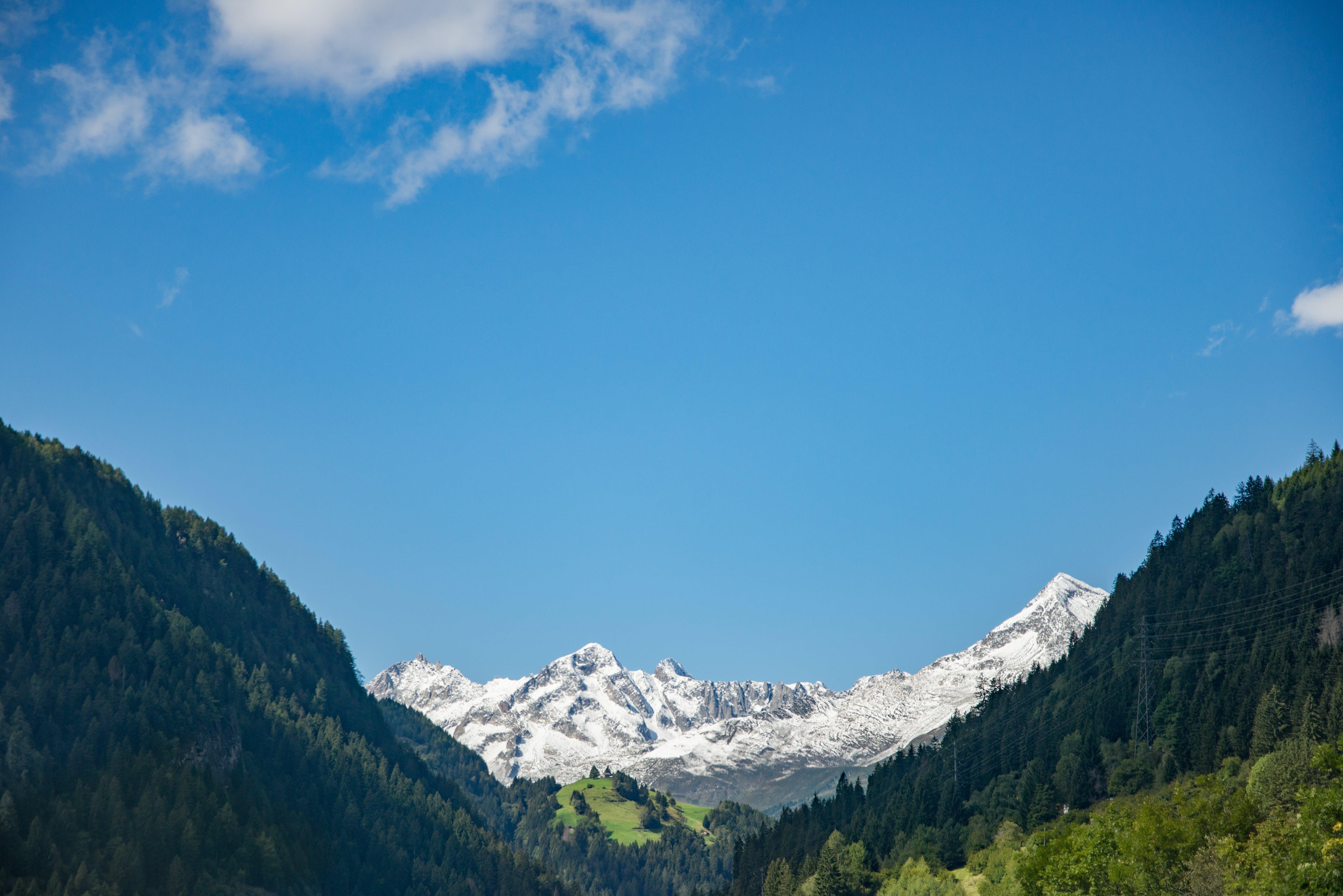 Fotos de stock gratuitas de alto, arboles, bosque, cielo