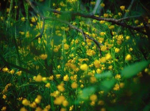 Free stock photo of blooming flower, dark forest wallpaper, dark green leaves
