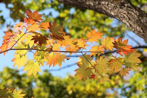 Free stock photo of affiliate, autumn, autumn colors
