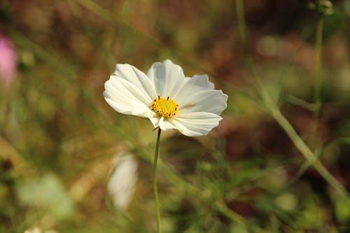 Free stock photo of bloom, botany, closeups