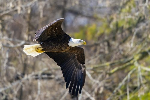 Brown and White Eagle Flying over Green Grass