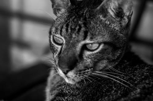 Gratis lagerfoto af close-up, dyr, dyrefotografering, fokus