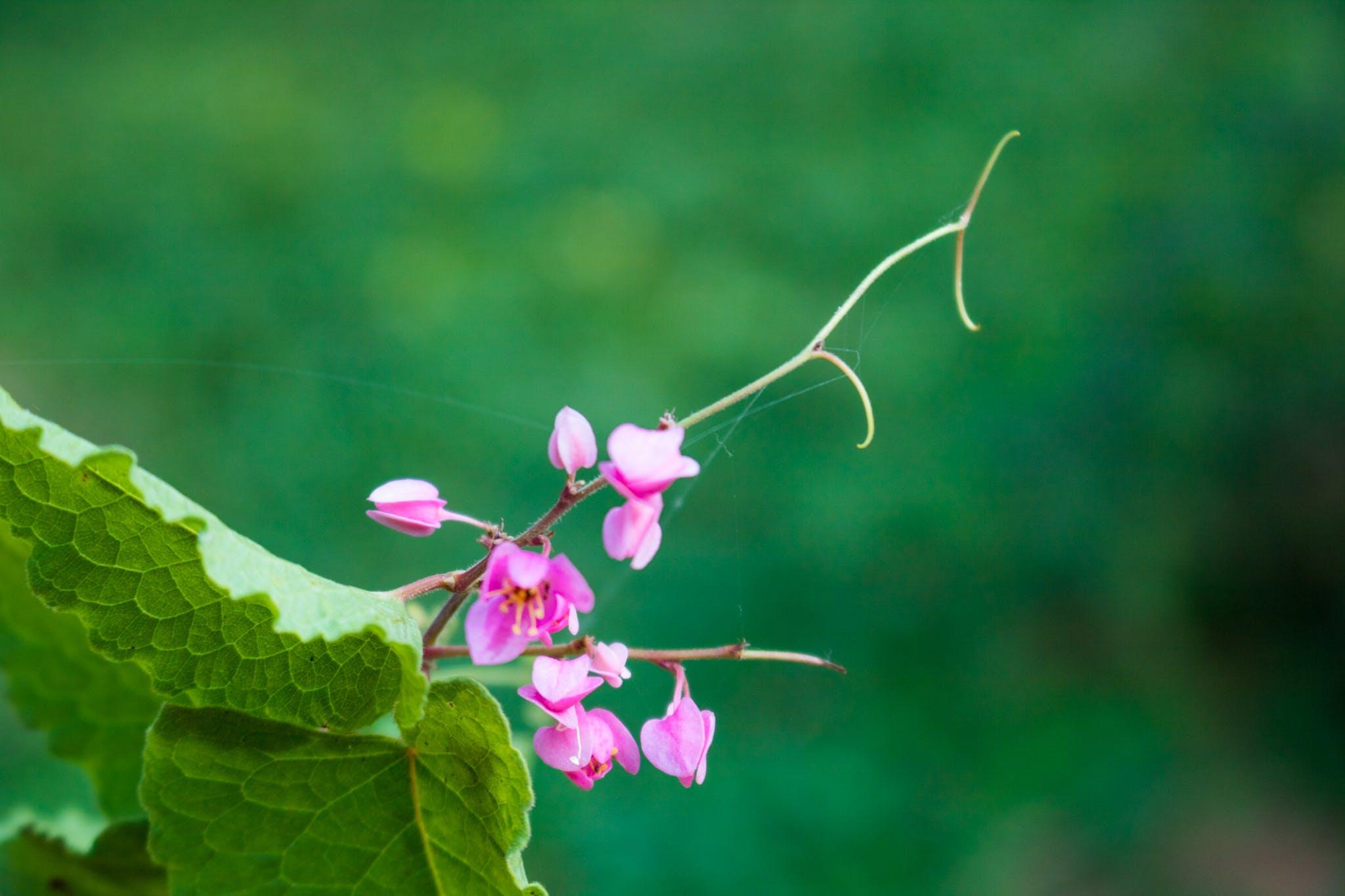Free stock photo of 50mm, beautiful flowers, bokeh, canon