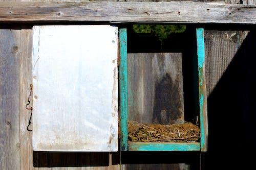 Fotobanka sbezplatnými fotkami na tému hniezdo, kov, les, ohrada