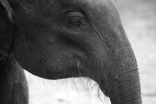 Free stock photo of elephant, vishnu vasu