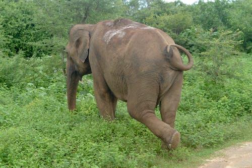 Free stock photo of elephant, vishnu vasu, wildlife