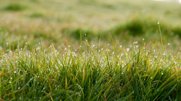Free stock photo of field, grass, lawn, dew