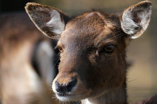 극단적 인 근접 촬영, 노루, 동물의 무료 스톡 사진
