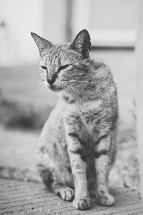 動物, 動物攝影, 可愛的 的 免費圖庫相片