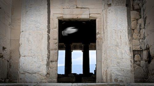 Безкоштовне стокове фото на тему «голуб, Стародавній»