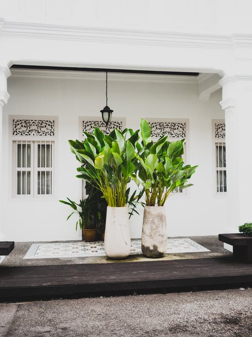 工厂, 建造, 白色, 裝飾植物 的 免费素材照片