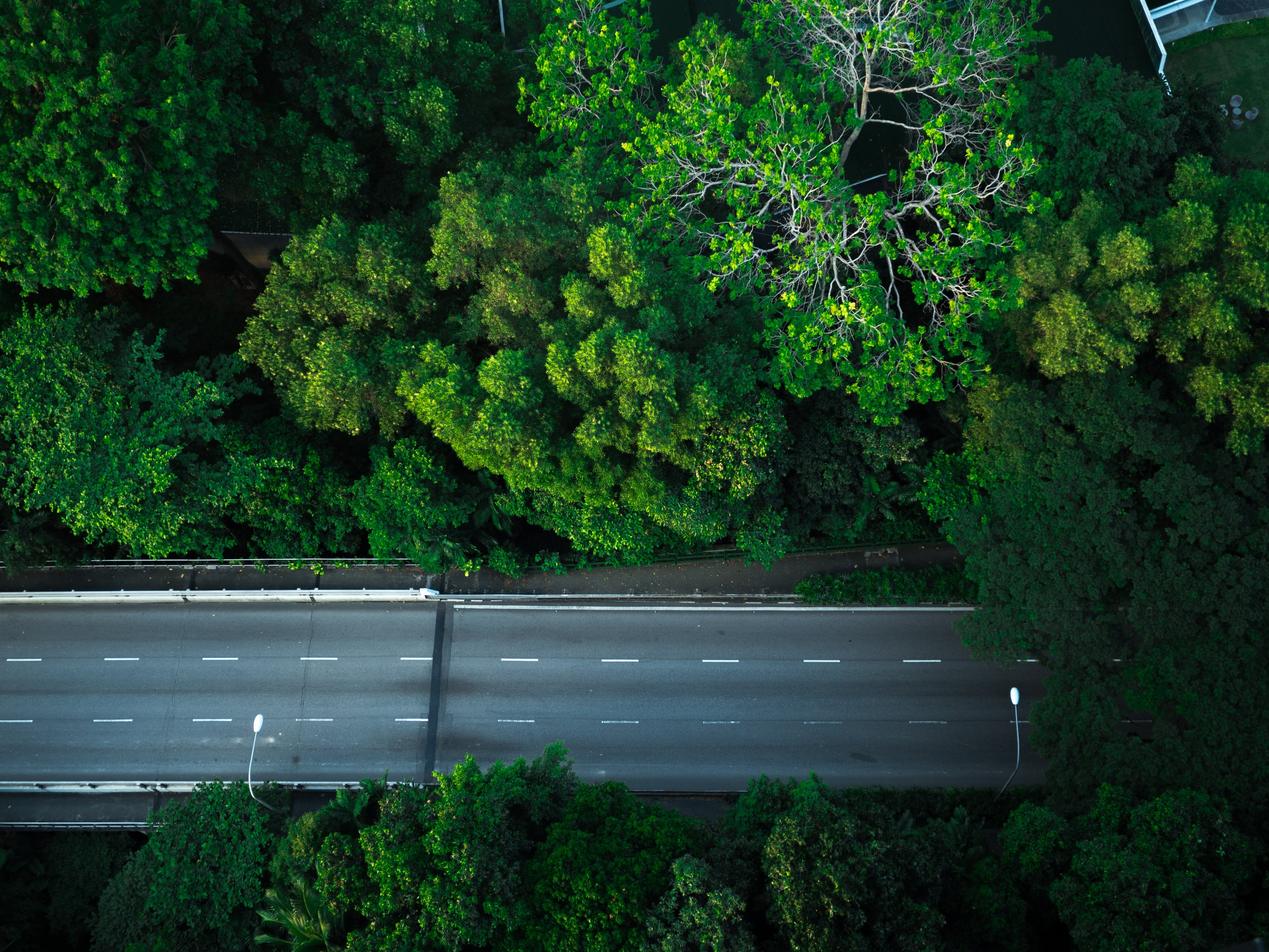 Free stock photo of drone cam, empty street, green, highway
