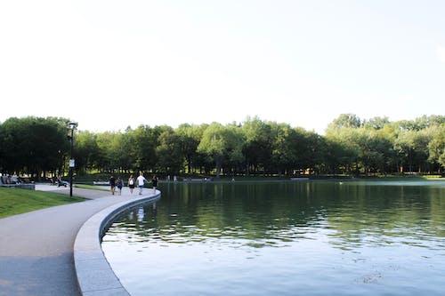 加拿大, 和平, 夏天, 夏日风景 的 免费素材照片