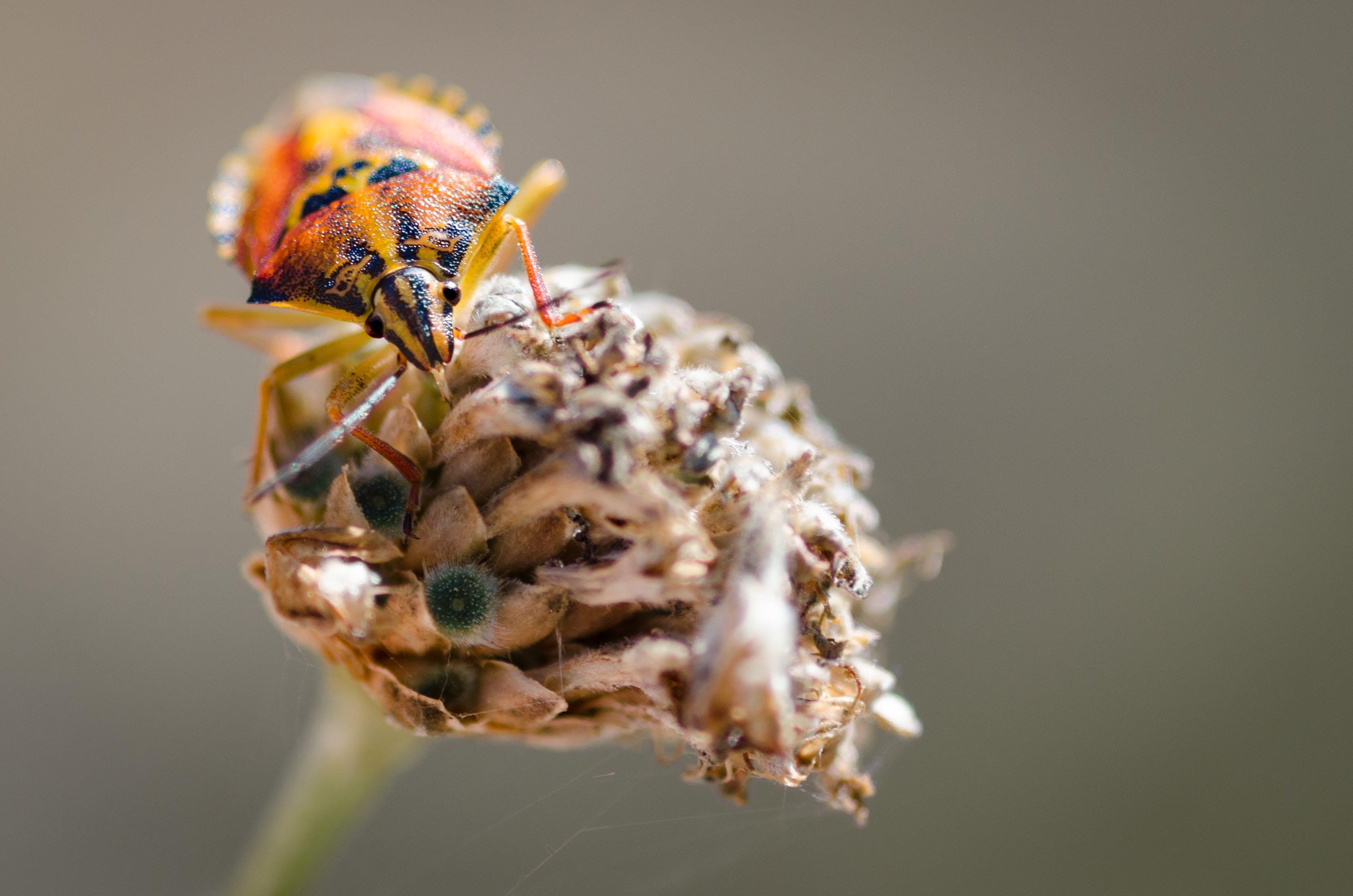 Free stock photo of nature, animal, orange, insect