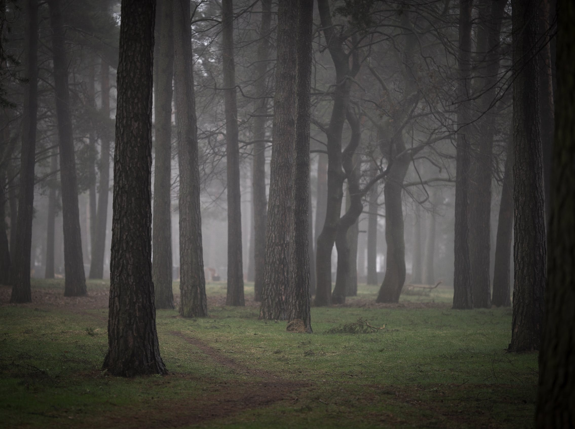 Free stock photo of forest, grass, mist, trees