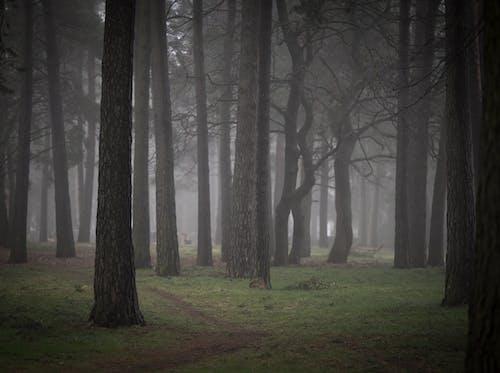 Fotobanka sbezplatnými fotkami na tému hmla, les, stromy, tráva