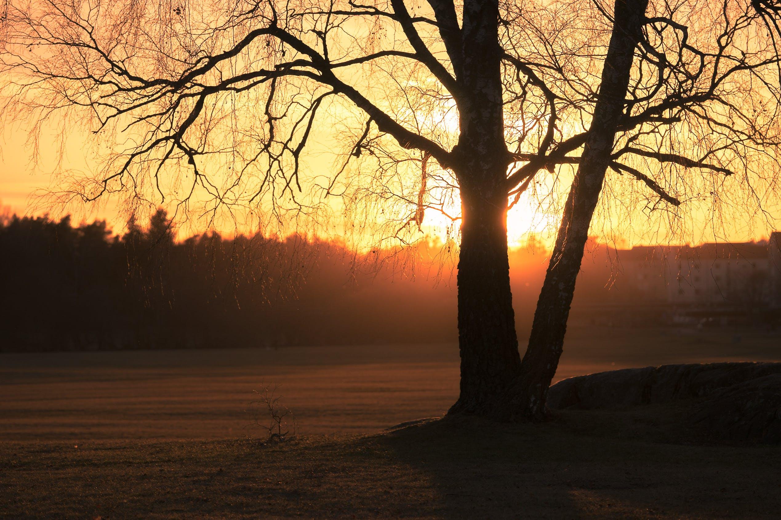Gratis stockfoto met achtergrondlicht, bomen, bossen, dageraad