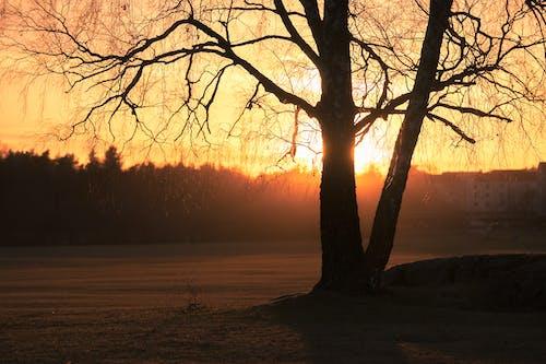 Imagine de stoc gratuită din apus, arbori, backlit, lumină