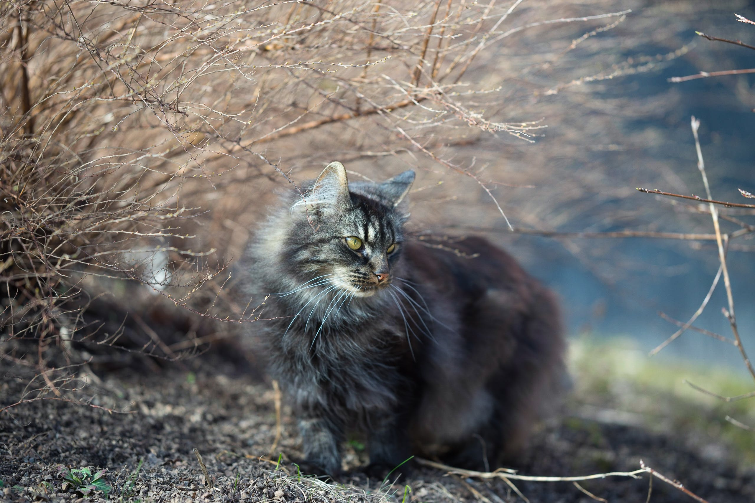 Photo of Cat Beside Leafless Plant