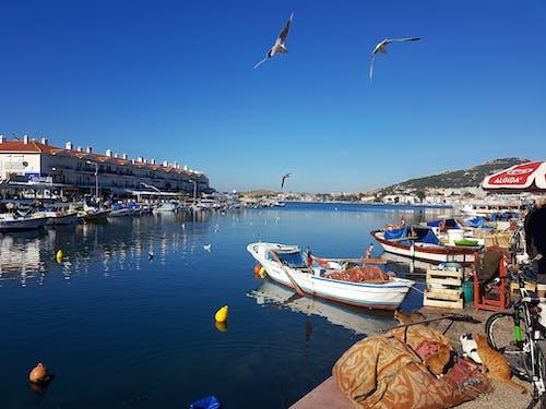 akşam Güneşi, balık Pazarı, manzara içeren Ücretsiz stok fotoğraf