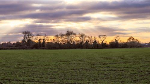 Kostenloses Stock Foto zu bäume, bewölkt, bewölkter himmel, dämmerung