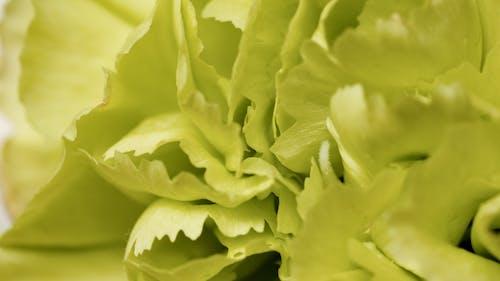 Immagine gratuita di avvicinamento, cluster, foglie