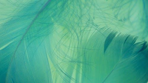 Imagine de stoc gratuită din abstract, acuarelă, alb